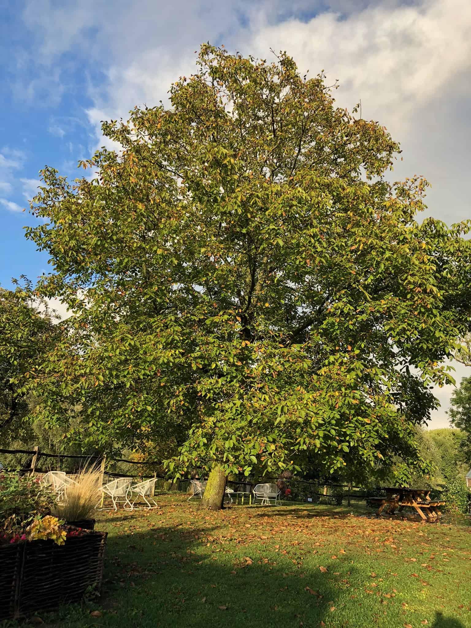 sophrologie aupres de mon arbre